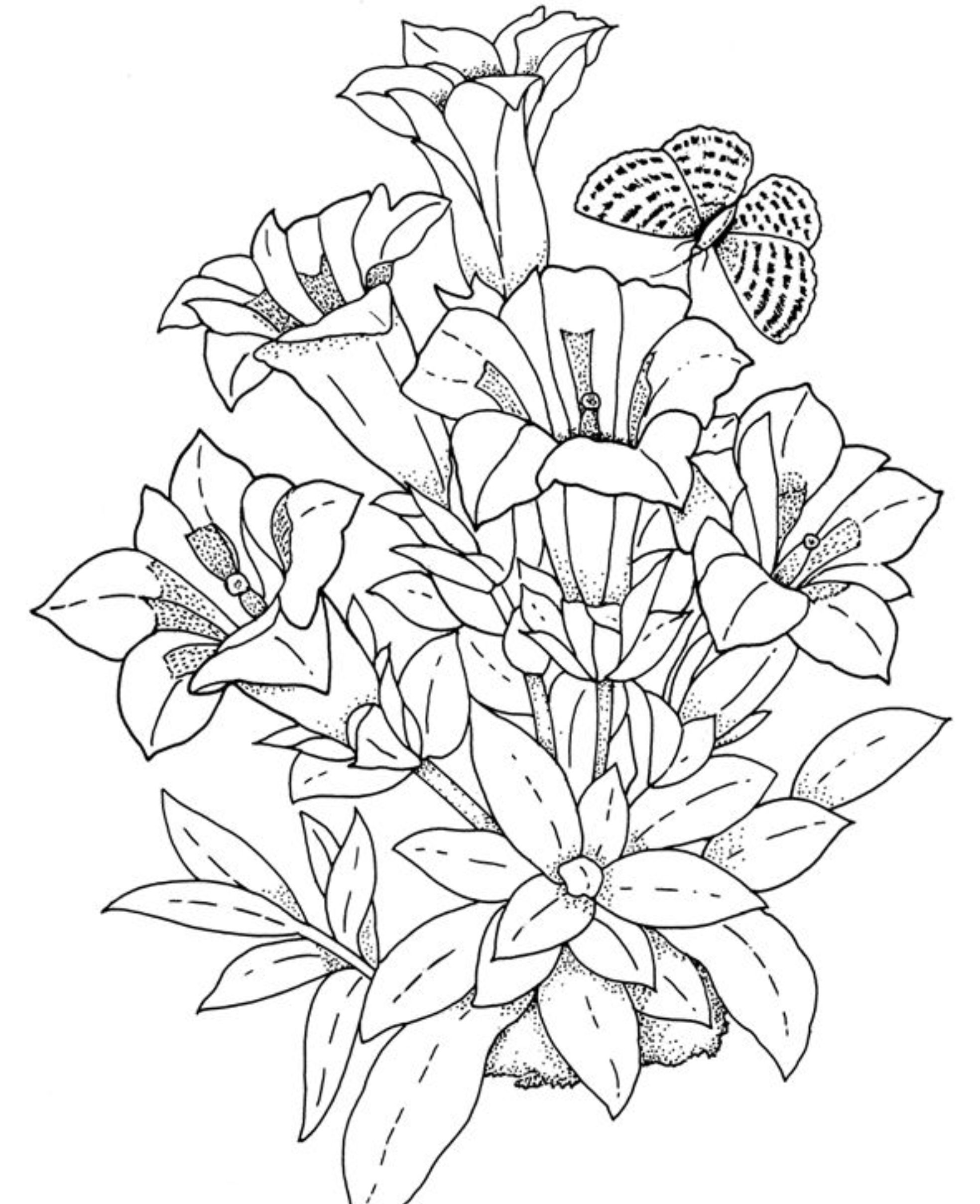 coloring pages for adults flowers bouquet of morning flowers flowers adult coloring pages flowers coloring adults pages for