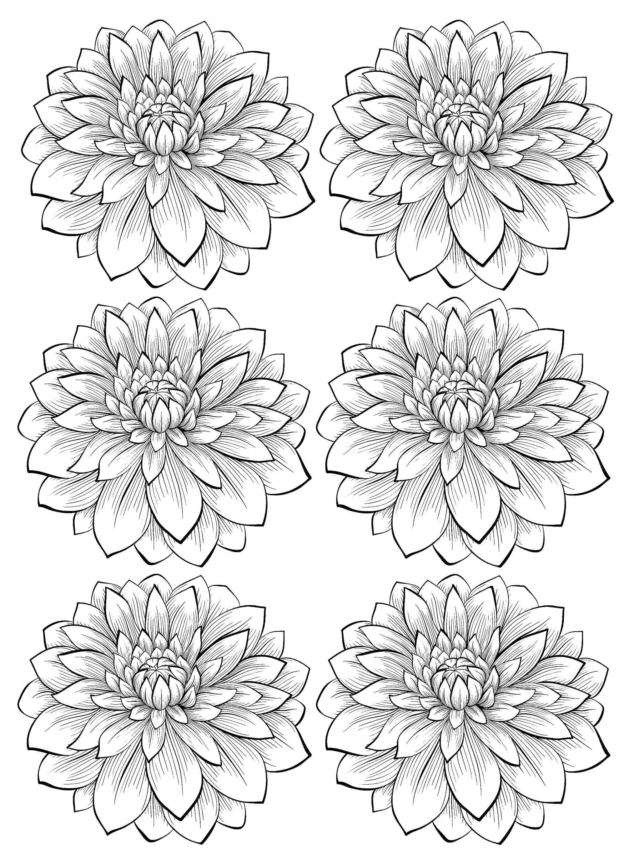coloring pages for adults flowers flower coloring pages for adults adults flowers coloring for pages