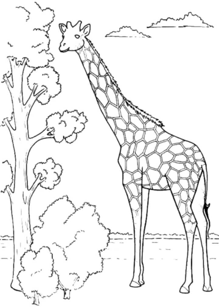 coloring pages giraffe print download giraffe coloring pages for kids to have fun coloring giraffe pages