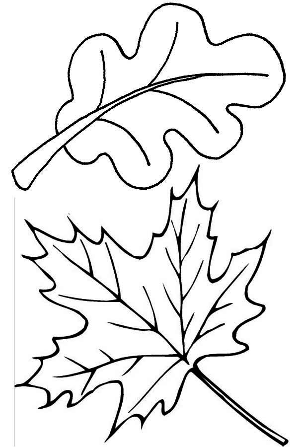 coloring pages leaves fall autumn leaf coloring page coloring home pages coloring leaves fall