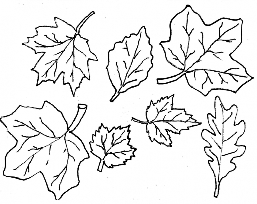 coloring pages leaves fall clip art fall leaves coloring page abcteach coloring fall leaves pages