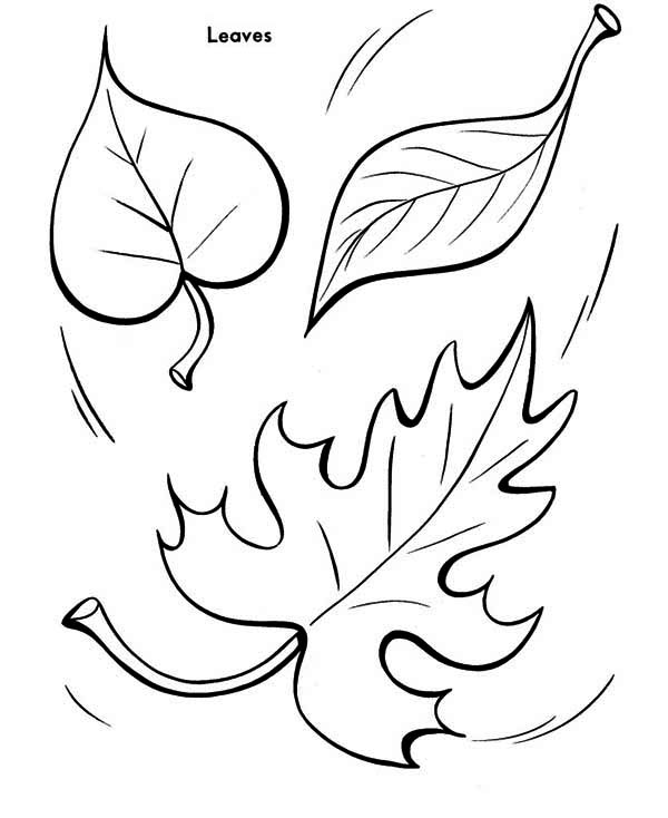 coloring pages leaves fall fall leaf to the ground coloring page color luna fall coloring pages leaves