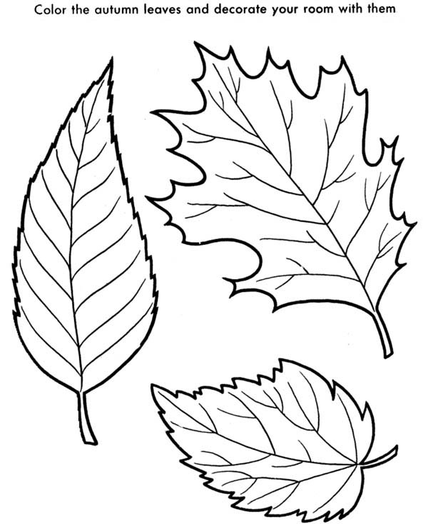 coloring pages leaves fall maple leaf is the autumn leaves coloring page kids play leaves fall coloring pages