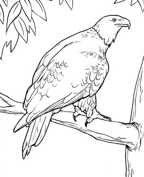 coloring pages of bald eagles bald eagle coloring pages coloring pages coloring home of coloring bald eagles pages