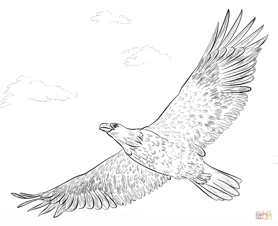 coloring pages of bald eagles bald eagle soaring coloring page free printable coloring coloring of bald eagles pages