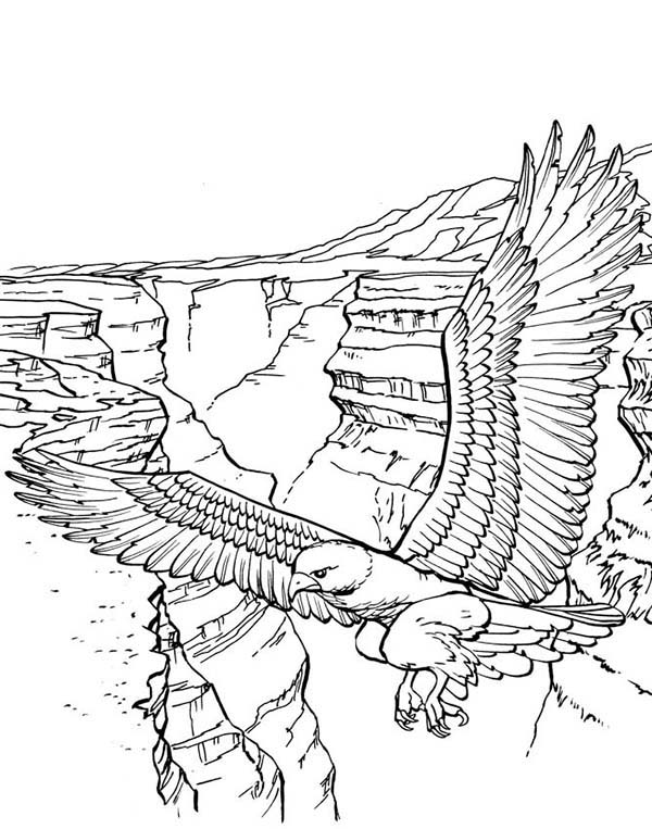 coloring pages of bald eagles bald eagle with smooth feather coloring page netart of eagles pages bald coloring
