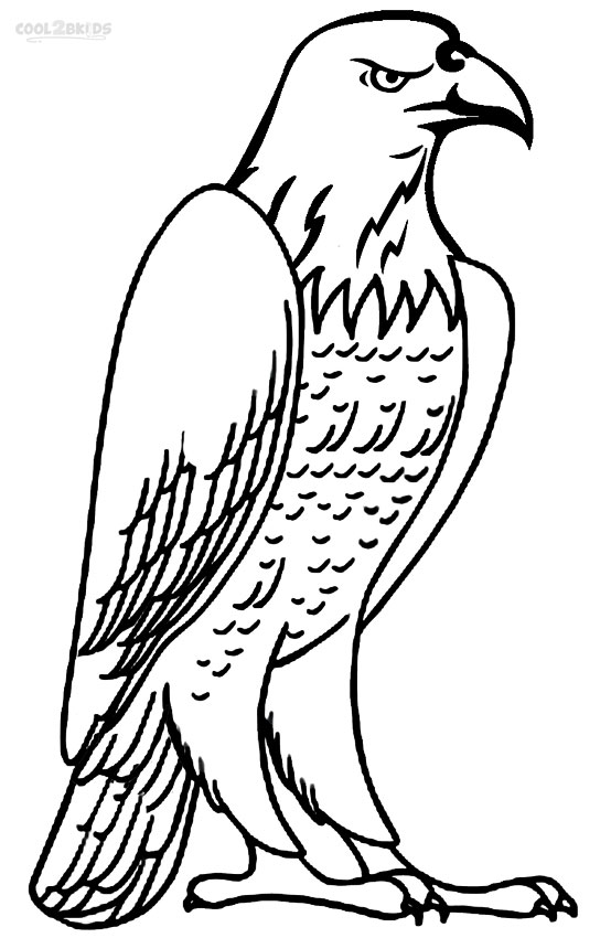coloring pages of bald eagles coloring pages of bald eagles eagles bald pages of coloring