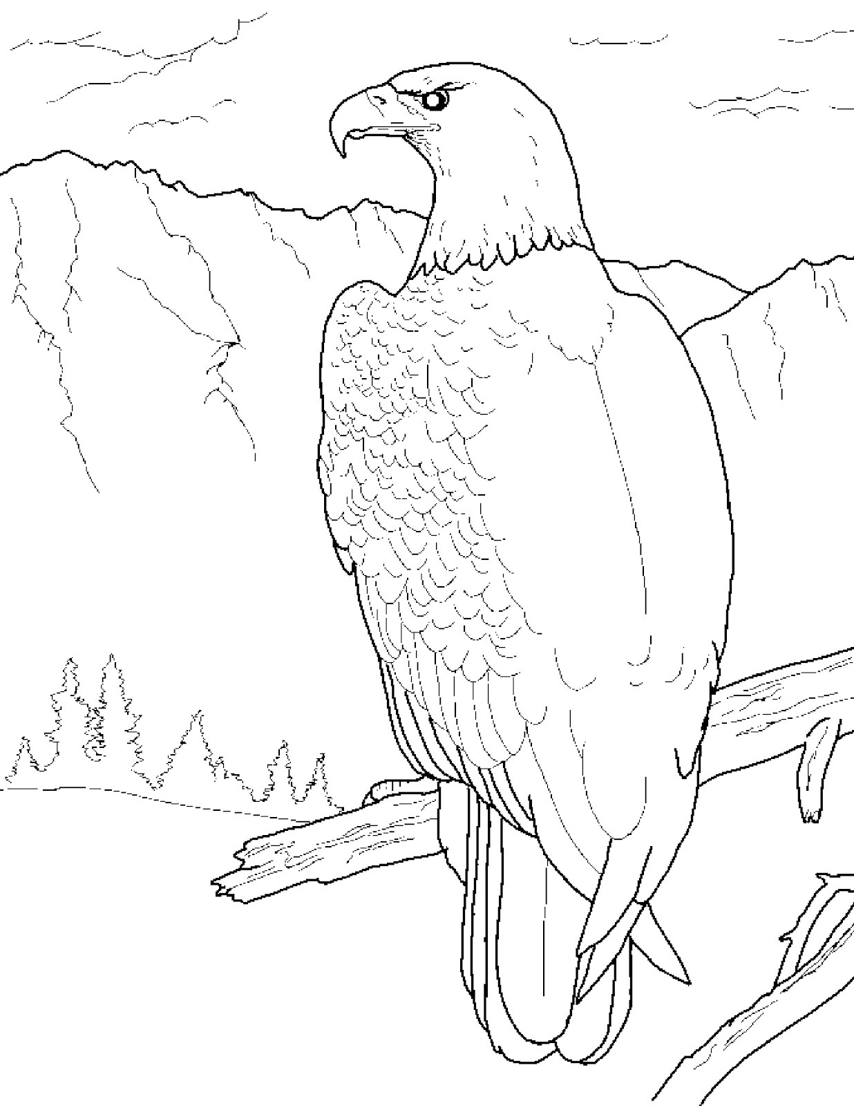 coloring pages of bald eagles coloring pages on pinterest adult coloring pages bald eagles of pages coloring