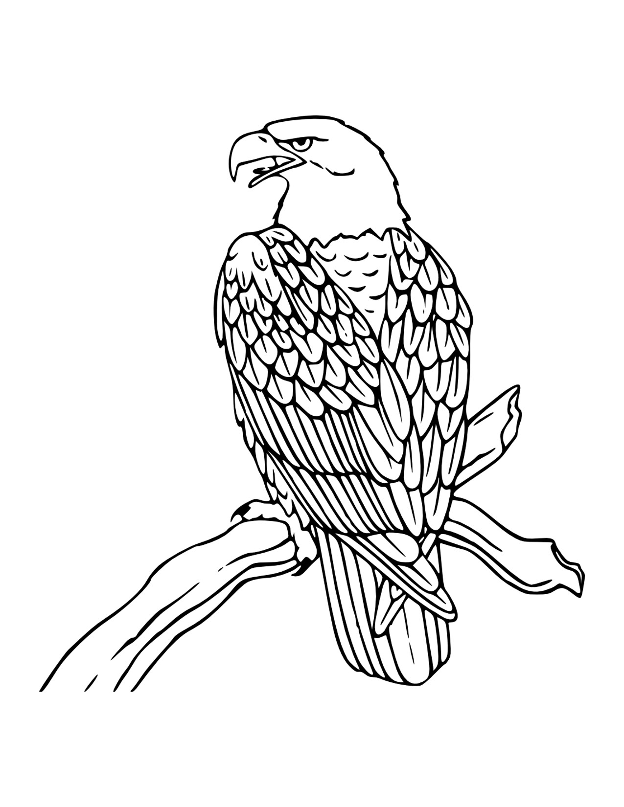 Coloring pages of bald eagles