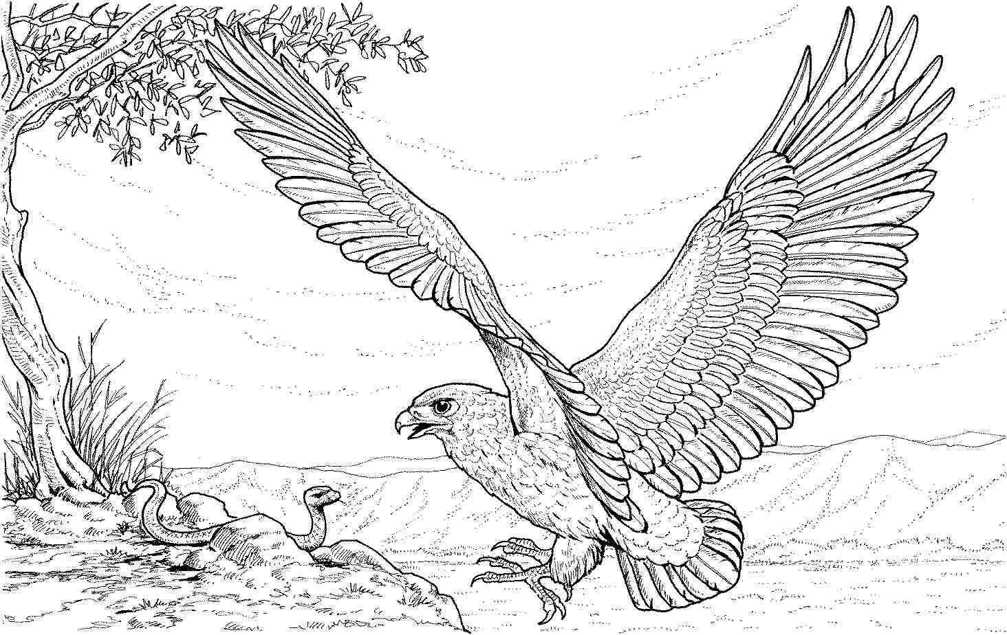 coloring pages of bald eagles free printable bald eagle coloring pages for kids pages coloring of bald eagles
