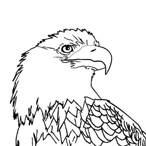 coloring pages of bald eagles printable bald eagle coloring pages for kids cool2bkids bald pages coloring eagles of