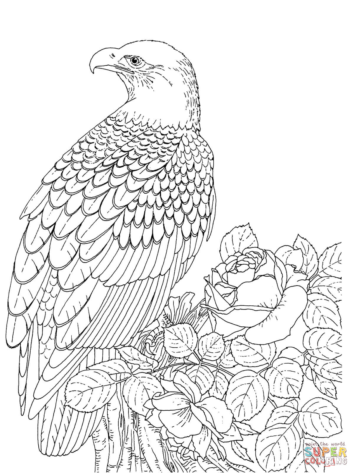 coloring pages of bald eagles printable bald eagle coloring pages for kids cool2bkids pages eagles bald of coloring