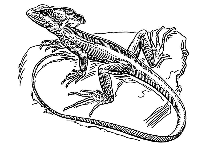 coloring pages of lizards free printable lizard coloring pages for kids of lizards coloring pages