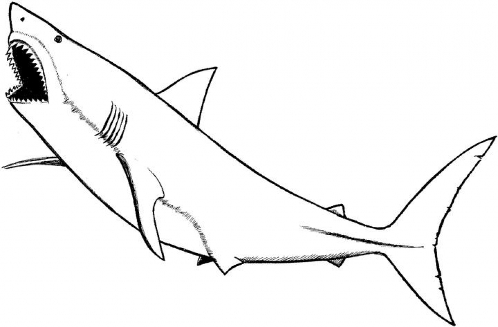 coloring pages sharks printable 9shark coloring pages jpg ai illustrator download pages sharks printable coloring