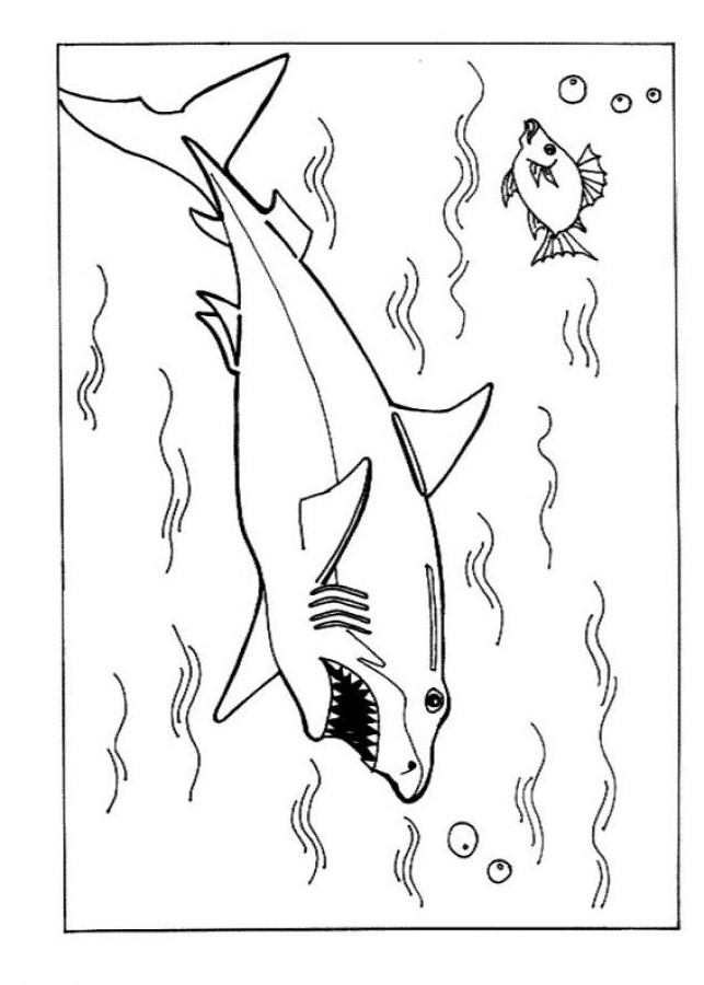 coloring pages sharks printable free printable shark coloring pages for kids pages sharks printable coloring
