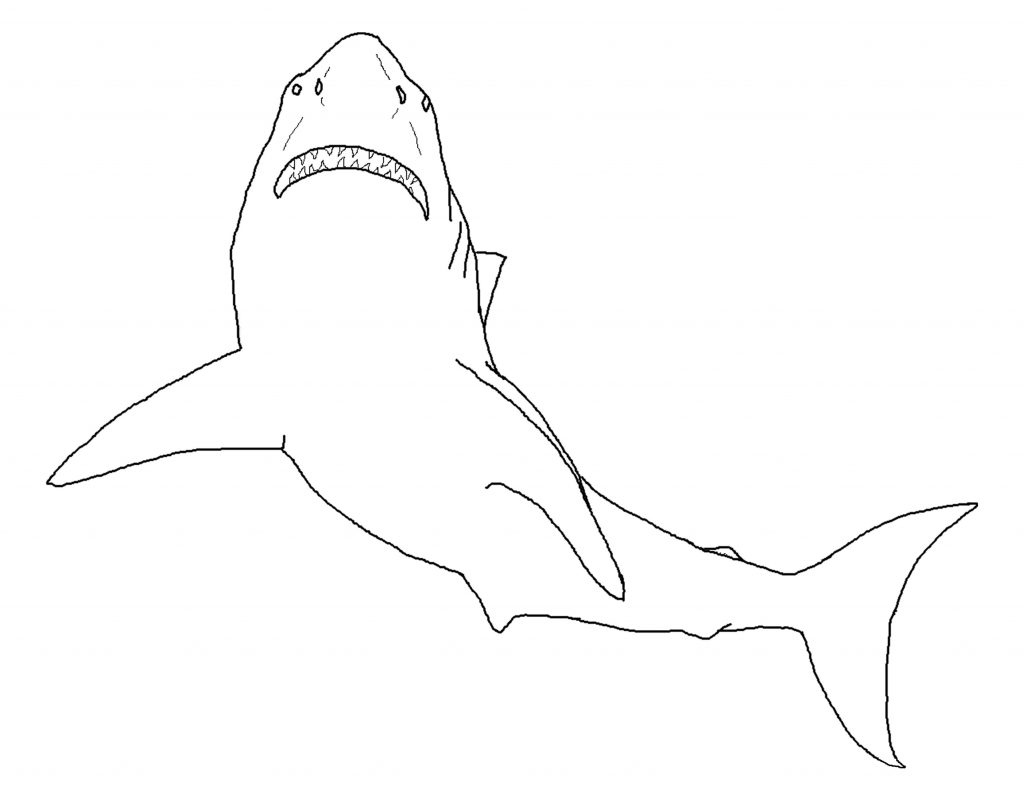 coloring pages sharks printable free shark color pages activity shelter printable pages sharks coloring