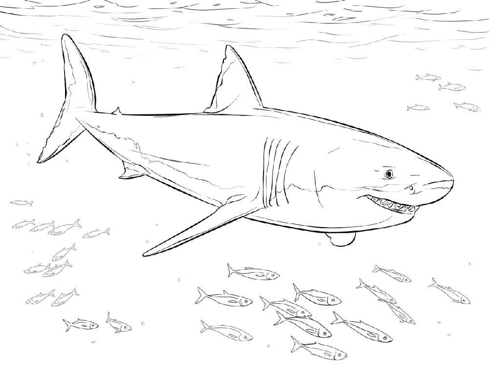 coloring pages sharks printable hungry shark world coloring pages at getcoloringscom pages printable coloring sharks