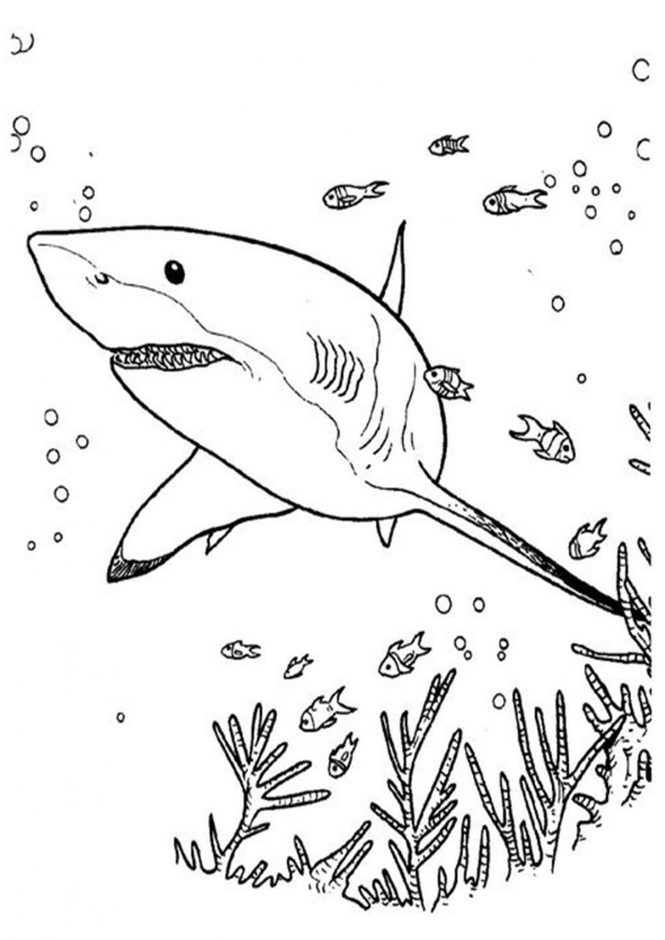coloring pages sharks printable scary shark coloring pages at getcoloringscom free pages sharks coloring printable