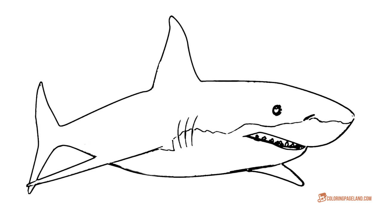 coloring pages sharks printable shark coloring pages to download and print for free printable sharks coloring pages