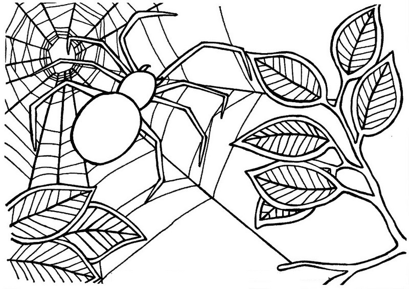 coloring pages websites free printable spider coloring pages for kids coloring websites pages