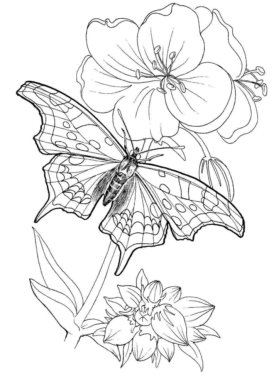 coloring pages with butterflies butterfly coloring pages for kids 100 images print for free with coloring butterflies pages