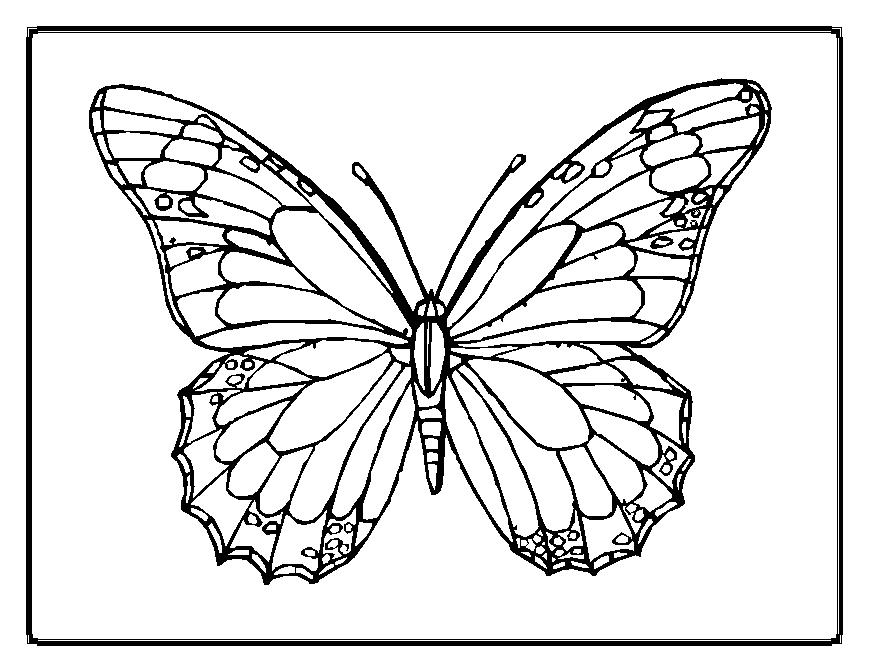 coloring pages with butterflies butterfly coloring pages pages with coloring butterflies
