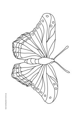 coloring pages with butterflies free printable butterfly coloring pages for kids with pages coloring butterflies