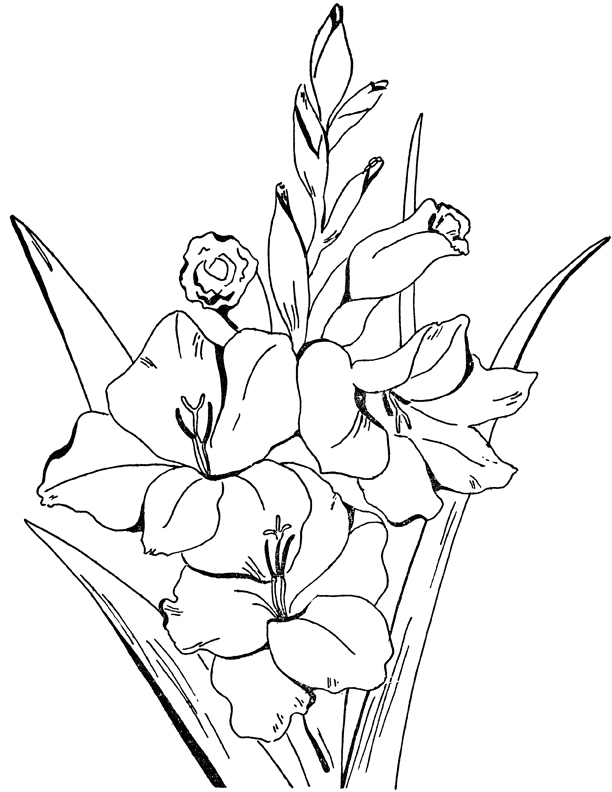 coloring pic of flower adult flowers coloring page gladiolus the graphics fairy pic of coloring flower
