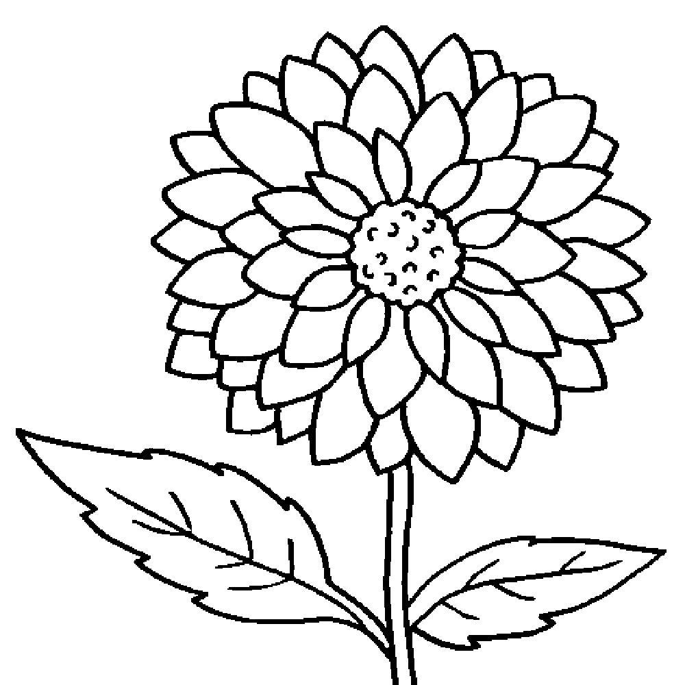 coloring pic of flower big flower coloring pages at getcoloringscom free of pic flower coloring