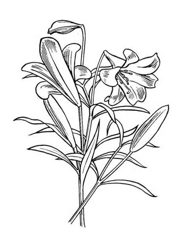 coloring pic of flower free printable flowers pdf coloring pages 10 of coloring pic flower