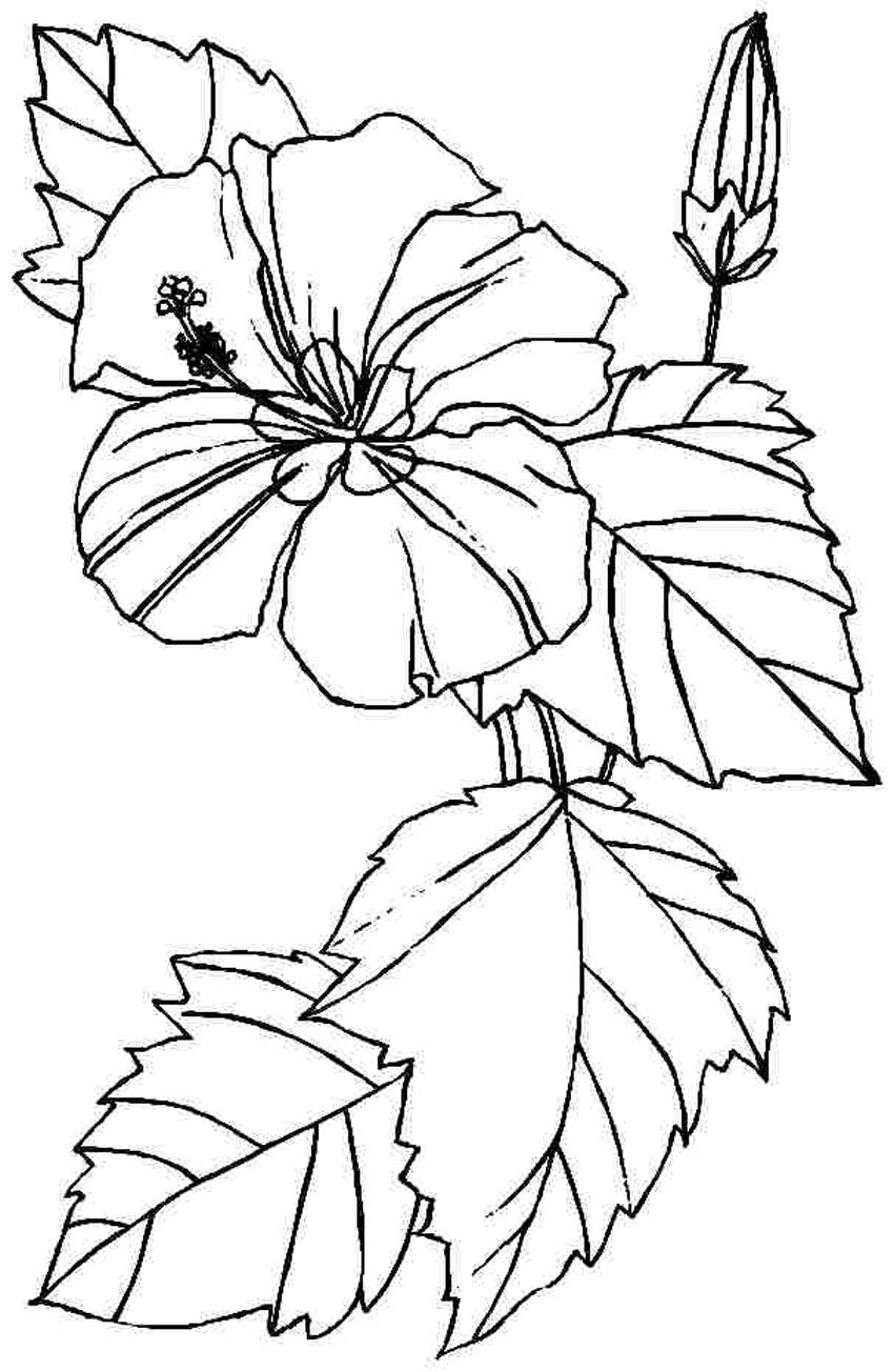 coloring pic of flower free printable hibiscus coloring pages for kids pic coloring of flower