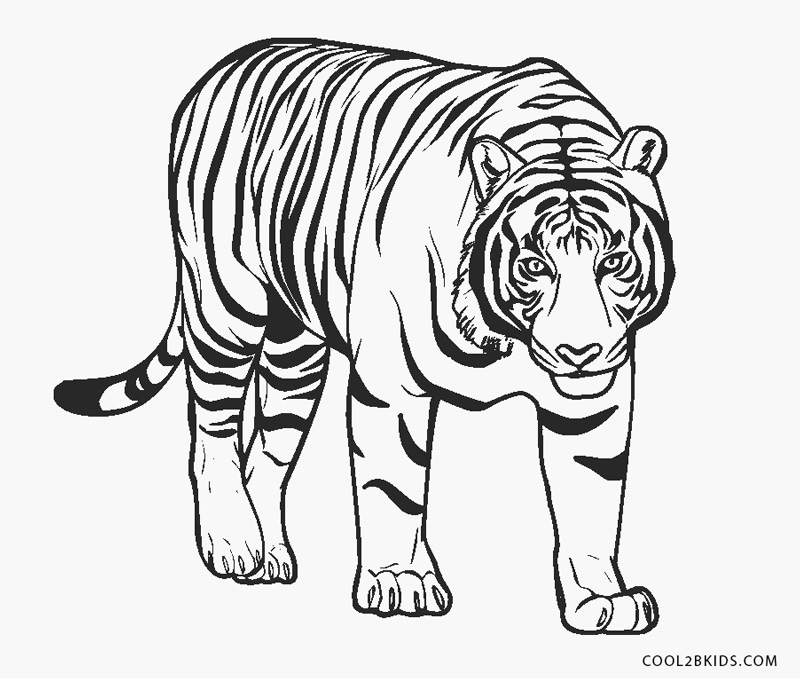 coloring picture of tiger free tiger coloring pages coloring of tiger picture 1 1