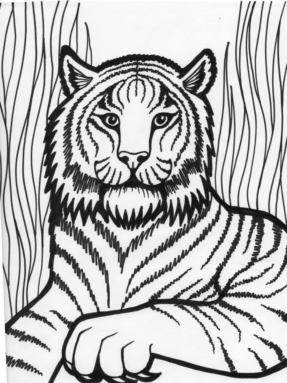 coloring picture of tiger tiger print drawing at getdrawings free download picture coloring tiger of