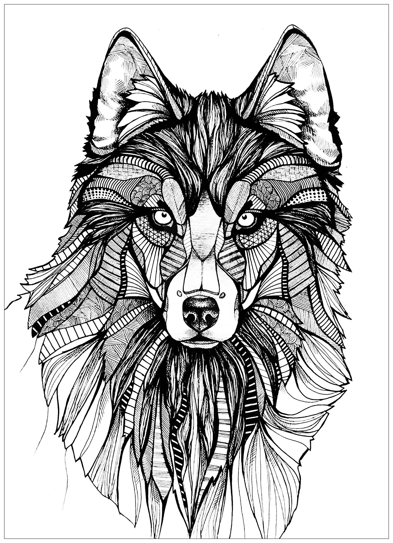 Coloring picture of wolves