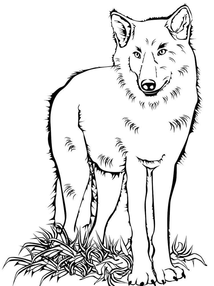 coloring picture of wolves print download wolf coloring pages theme of picture wolves coloring