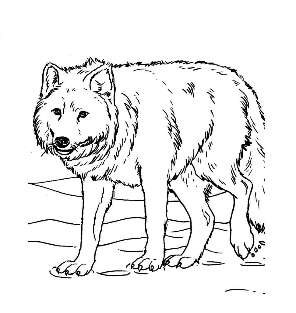 coloring picture of wolves wolf pack coloring pages bestappsforkidscom wolves of coloring picture