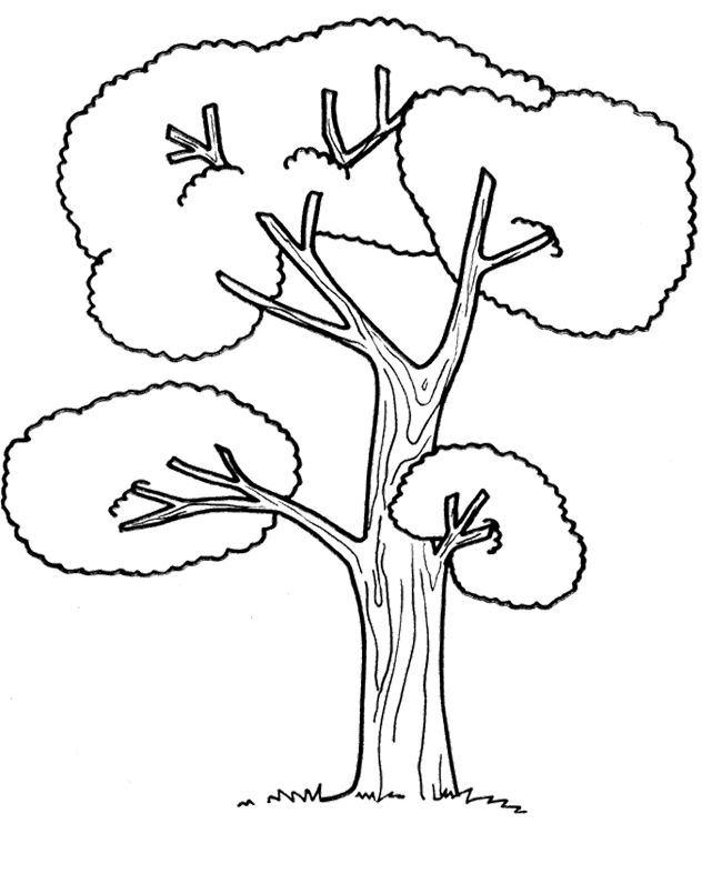coloring picture tree 5 best images of tree trunk pattern printable tree trunk tree picture coloring