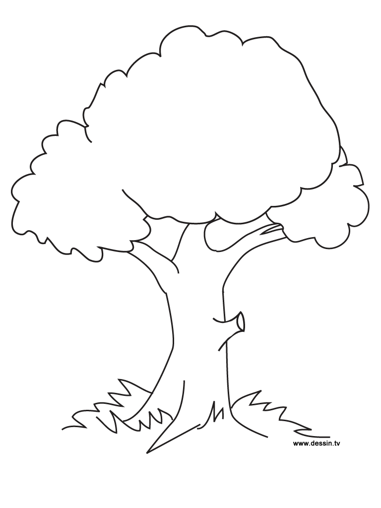 coloring picture tree free printable tree coloring pages for kids cool2bkids tree picture coloring