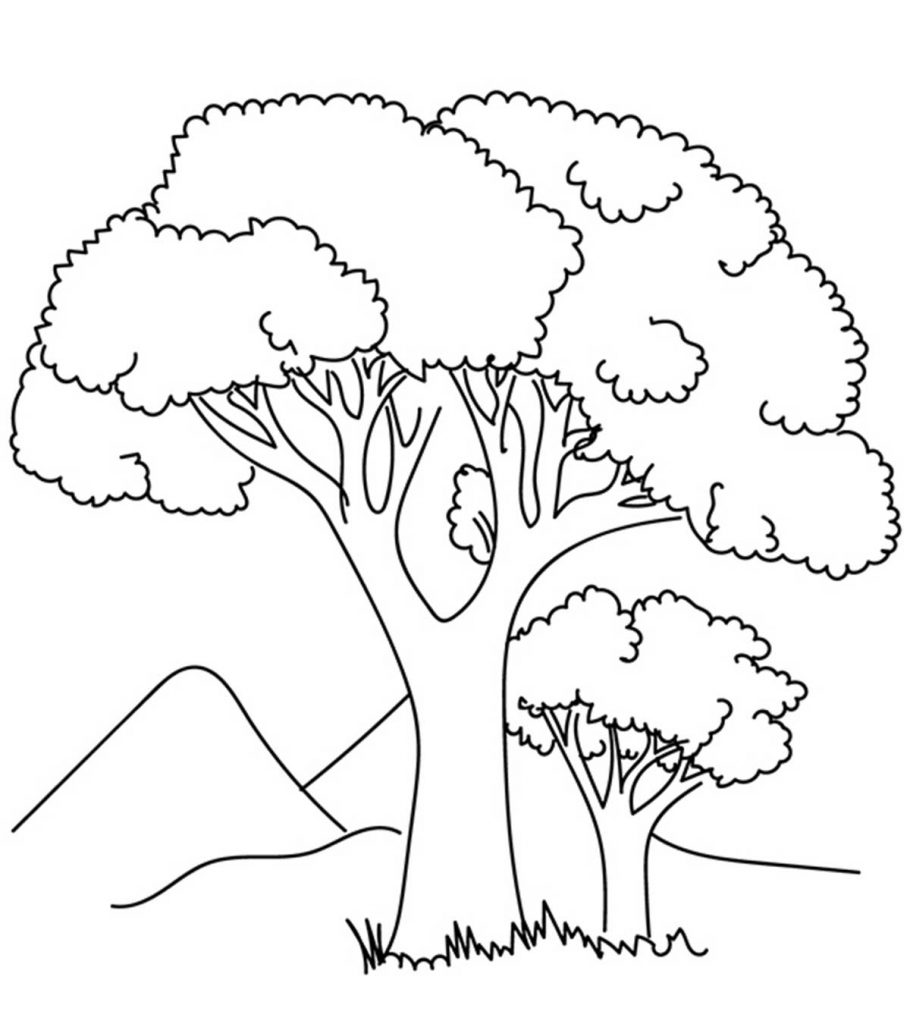 coloring picture tree free printable tree coloring pages for kids cool2bkids tree picture coloring 1 1