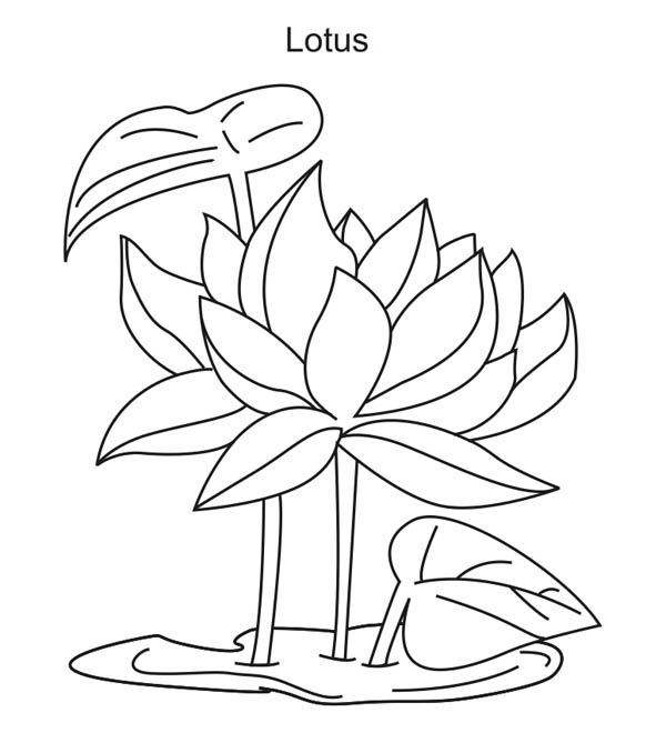 coloring pictures of a flower flowers coloring pages coloringpages1001com a coloring pictures of flower