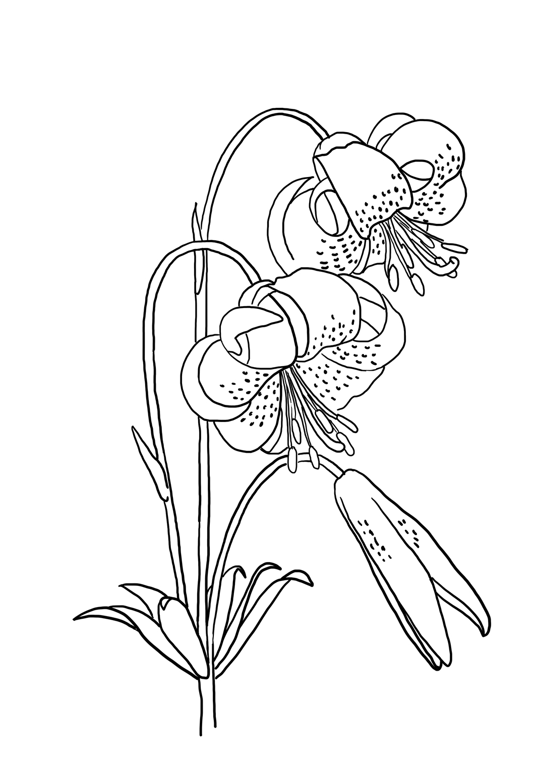 coloring pictures of a flower flowers coloring pages coloringpages1001com of pictures flower coloring a