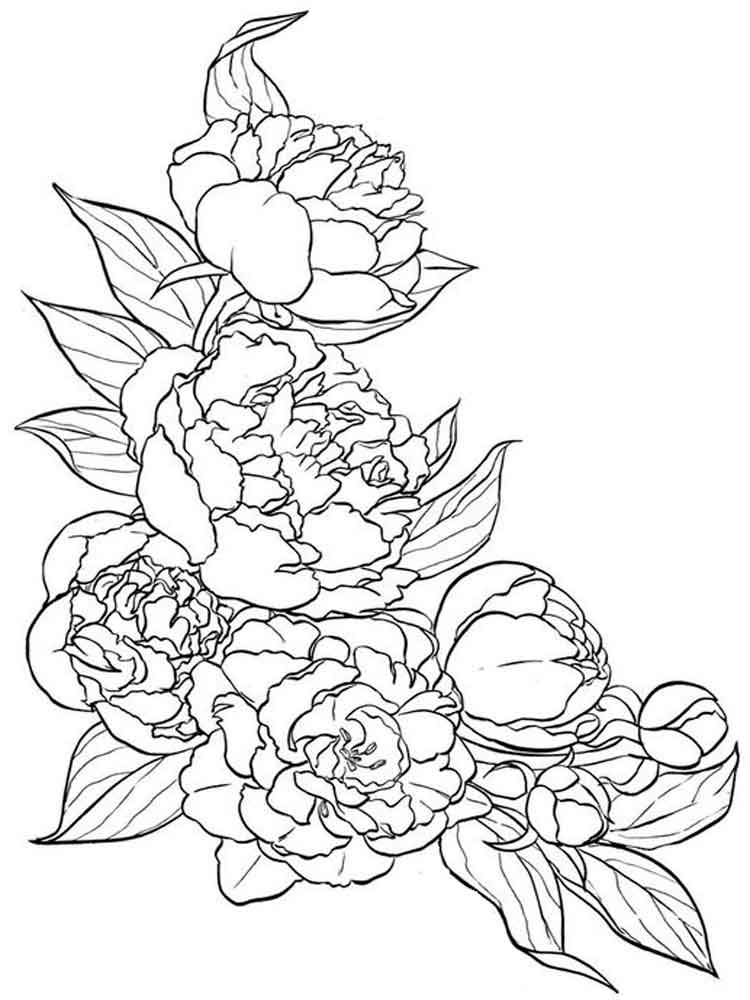 coloring pictures of a flower plant coloring pages to download and print for free of flower a pictures coloring