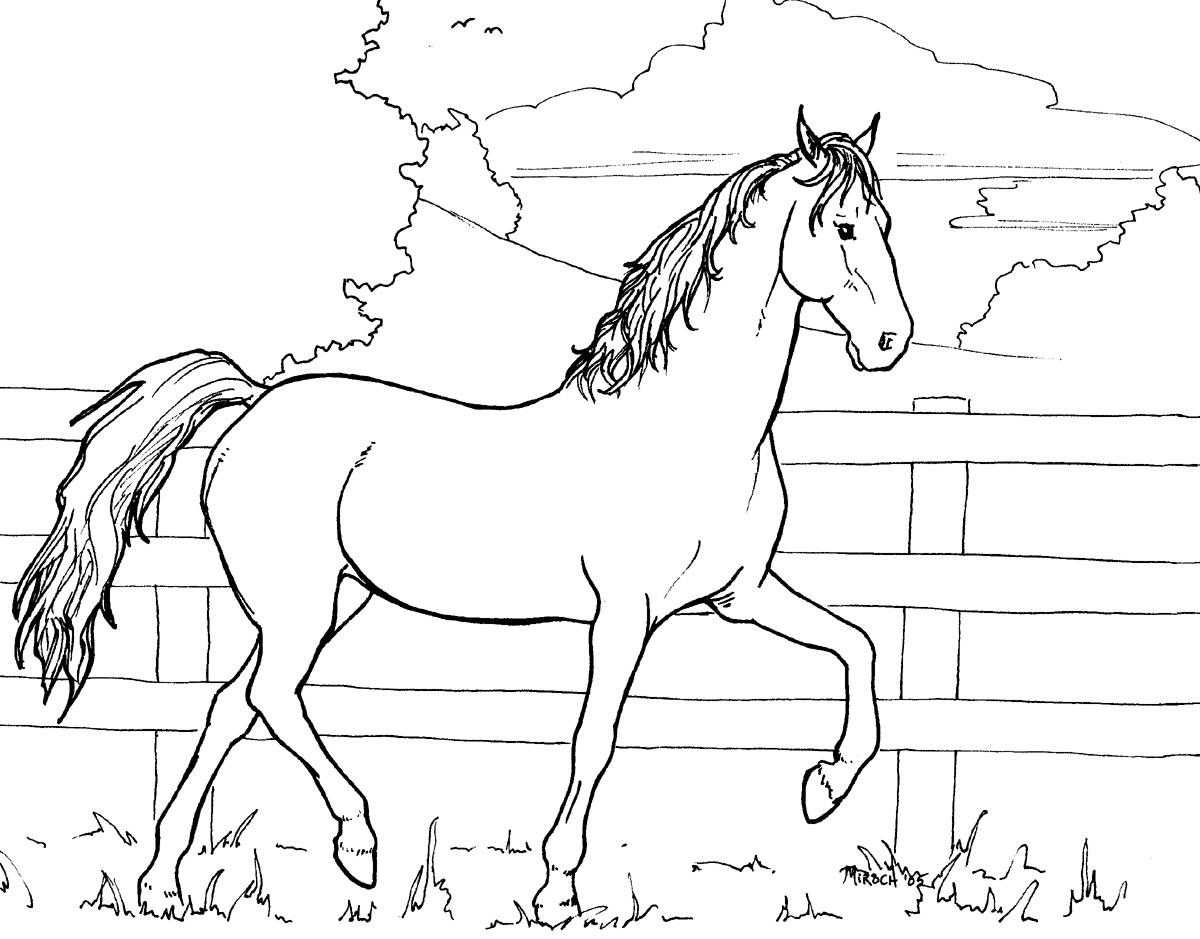 coloring pictures of horse horse color sheet for kids activity shelter coloring horse of pictures