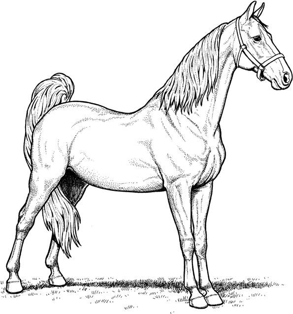 coloring pictures of horse horse pictures for kids printable activity shelter pictures horse coloring of