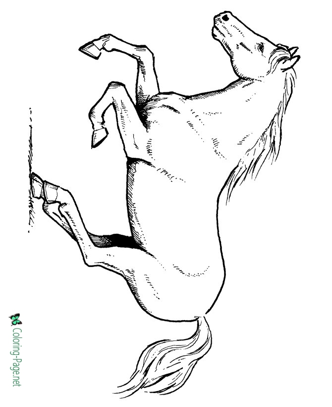 coloring pictures of horse printable horse coloring sheets 029 of coloring pictures horse