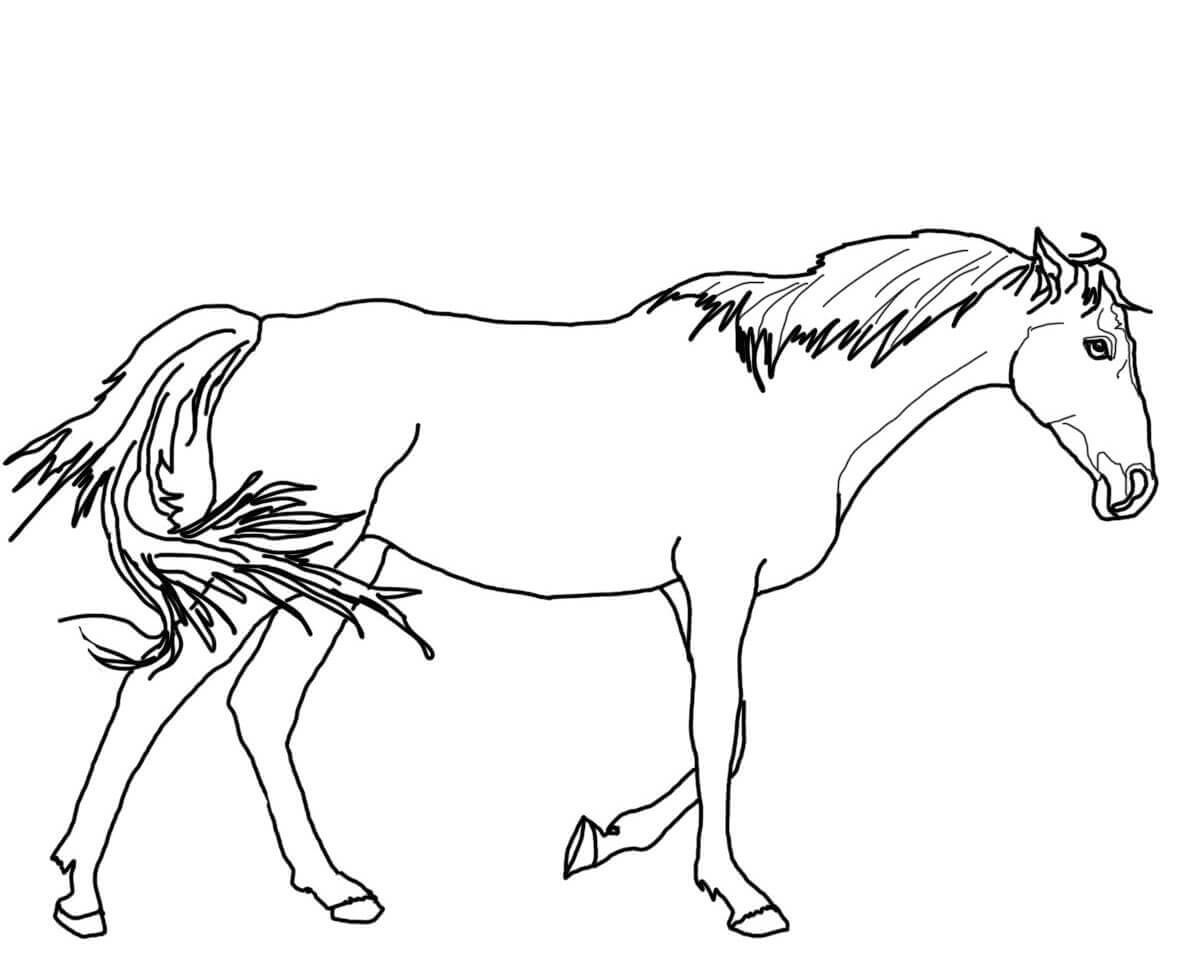 coloring pictures of horse running stallion horse coloring pages coloring horse pictures of