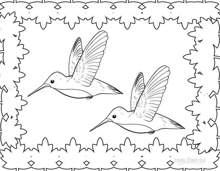 coloring pictures of hummingbirds birds coloring pages cool2bkids of pictures hummingbirds coloring