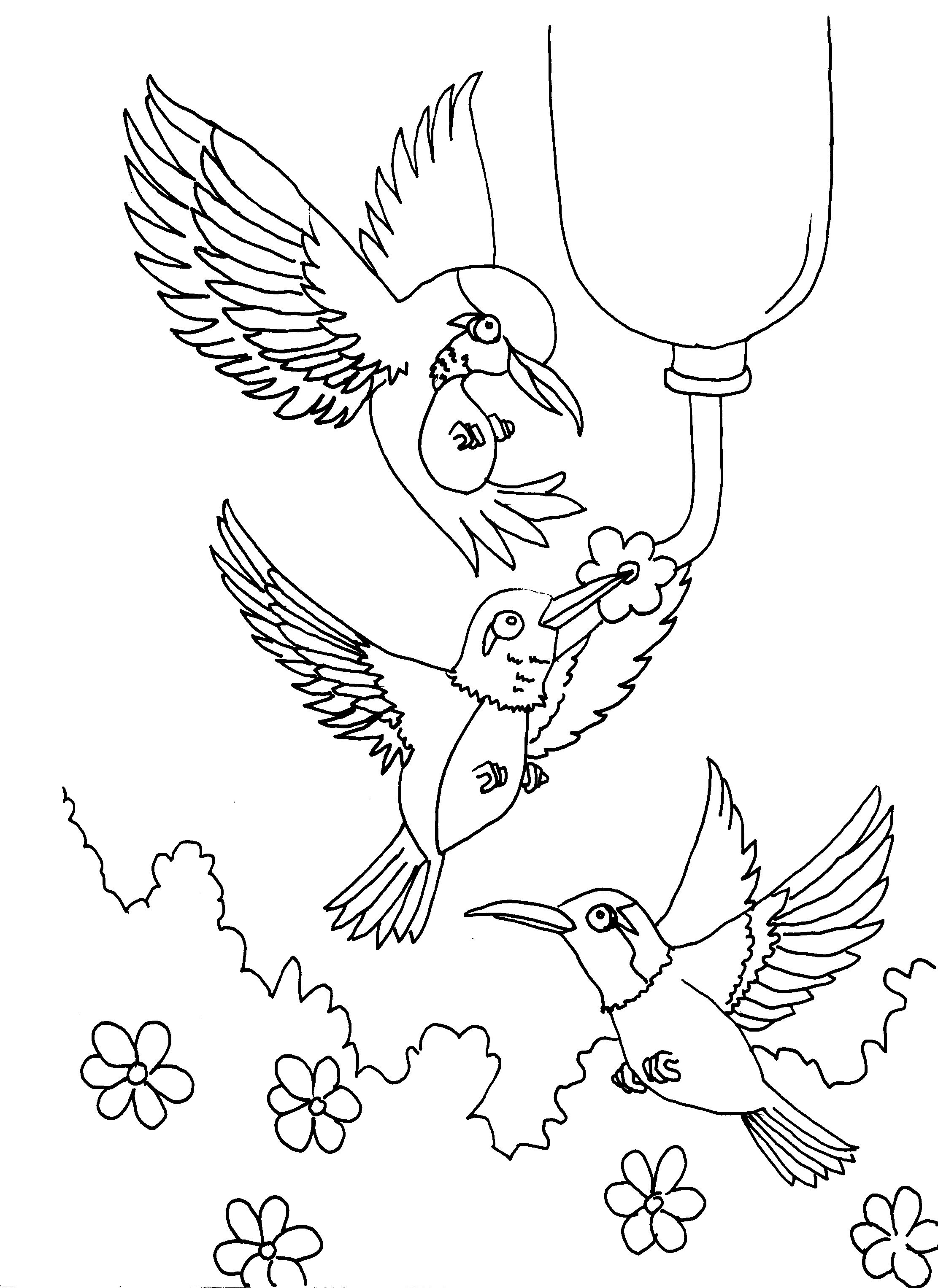 Coloring pictures of hummingbirds