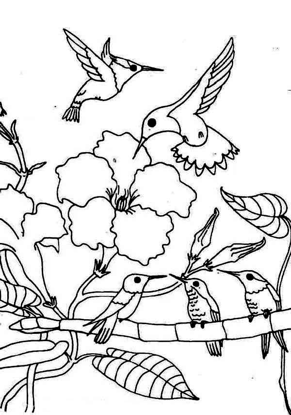 coloring pictures of hummingbirds gathering season of hummingbird coloring page kids play of hummingbirds pictures coloring