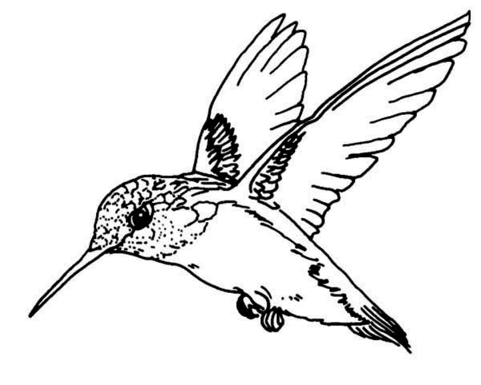 coloring pictures of hummingbirds get this free hummingbird coloring pages 34753 of coloring hummingbirds pictures